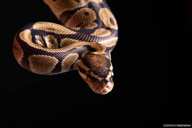 Python creator steps down after almost 30 years in charge
